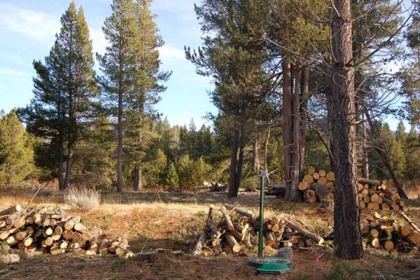 Same photo after thinning lodgepole pine trees as par of the restoration project.