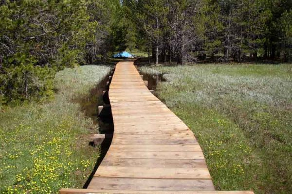 A board walk was constructed through this area to protect the meadow while allowing recreation access