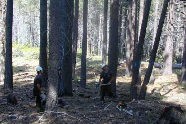 CSP forestry crew thinning and reducing fuels